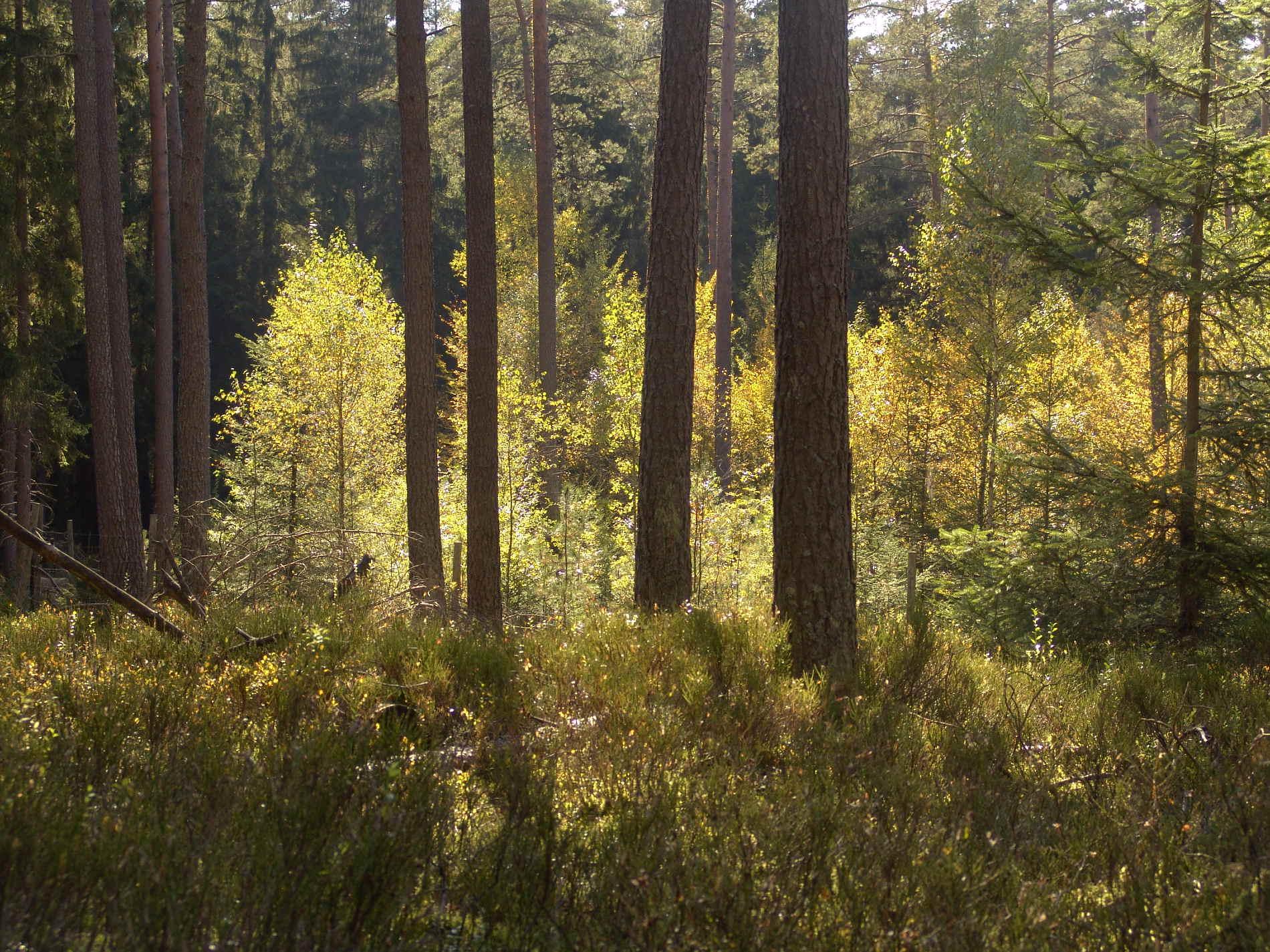 Holz von Hier steht für nachhaltige heimische Waldwirtschaft